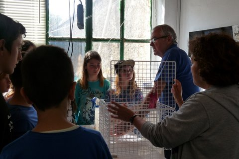Explaining the cages