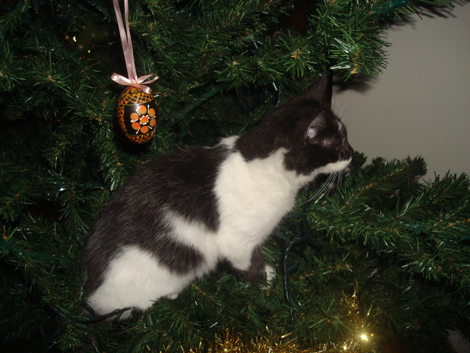 Maggie in the Xmas Tree 2013